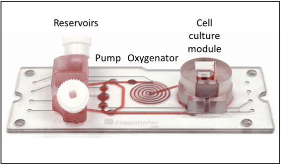 Chip for 3D cell cultures with pump and oxygenator