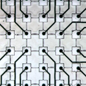 Electrodes on the well bottom of a MEA chip, each well 100 x 100 x 50 µm